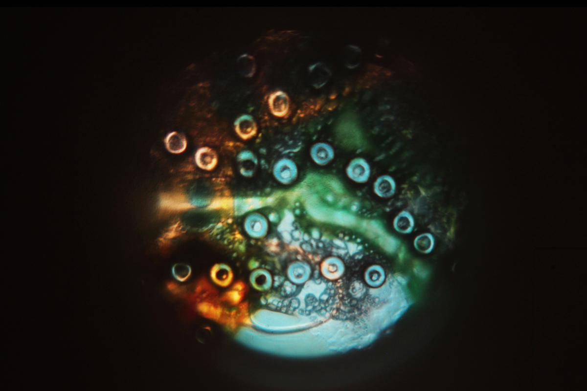 Mya Lurgo, Vetrino mobile, light art 2